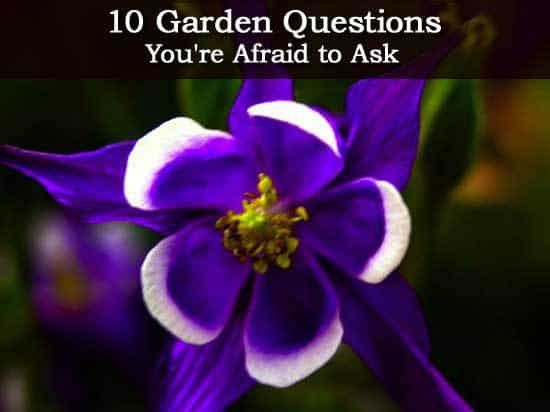 10 garden questions you 39 re afraid to ask for Gardening questionnaire