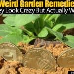 21 Weird Garden Remedies… They Look Crazy But Actually Work