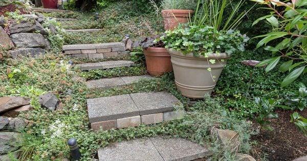 garden-stone-steps-08312016