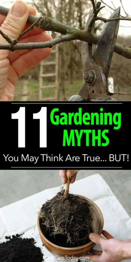 11 Los principales mitos sobre jardinería que puede pensar que son ciertos ... ¡Pero!