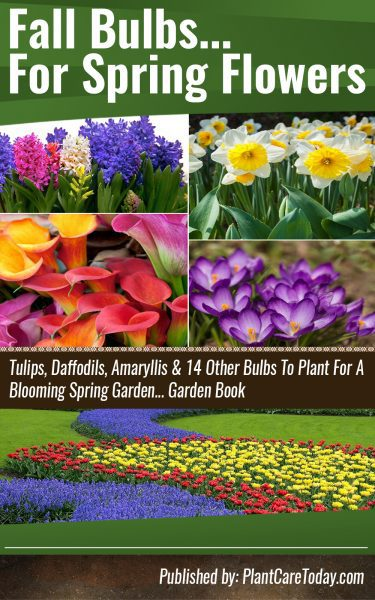 Fall Bulbs For Spring Flowers
