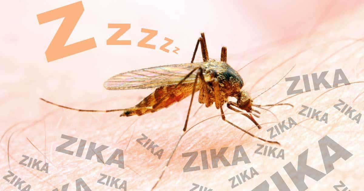 Natural Ways To Get Rid Of Mosquitoes In Your Yard