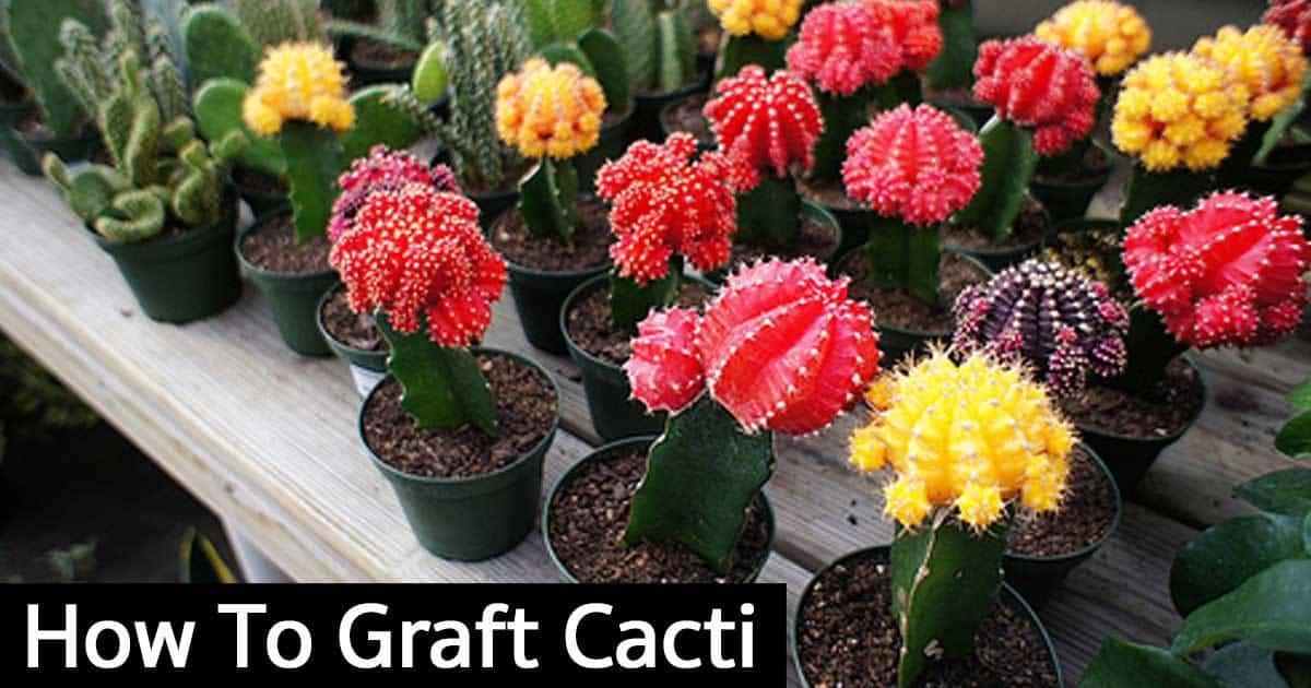 graftcacti, Natural flower
