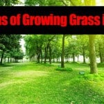 Problems of Growing Grass in Shade