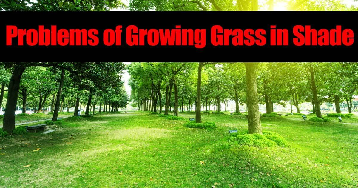 Problems of Growing Grass in Shade -