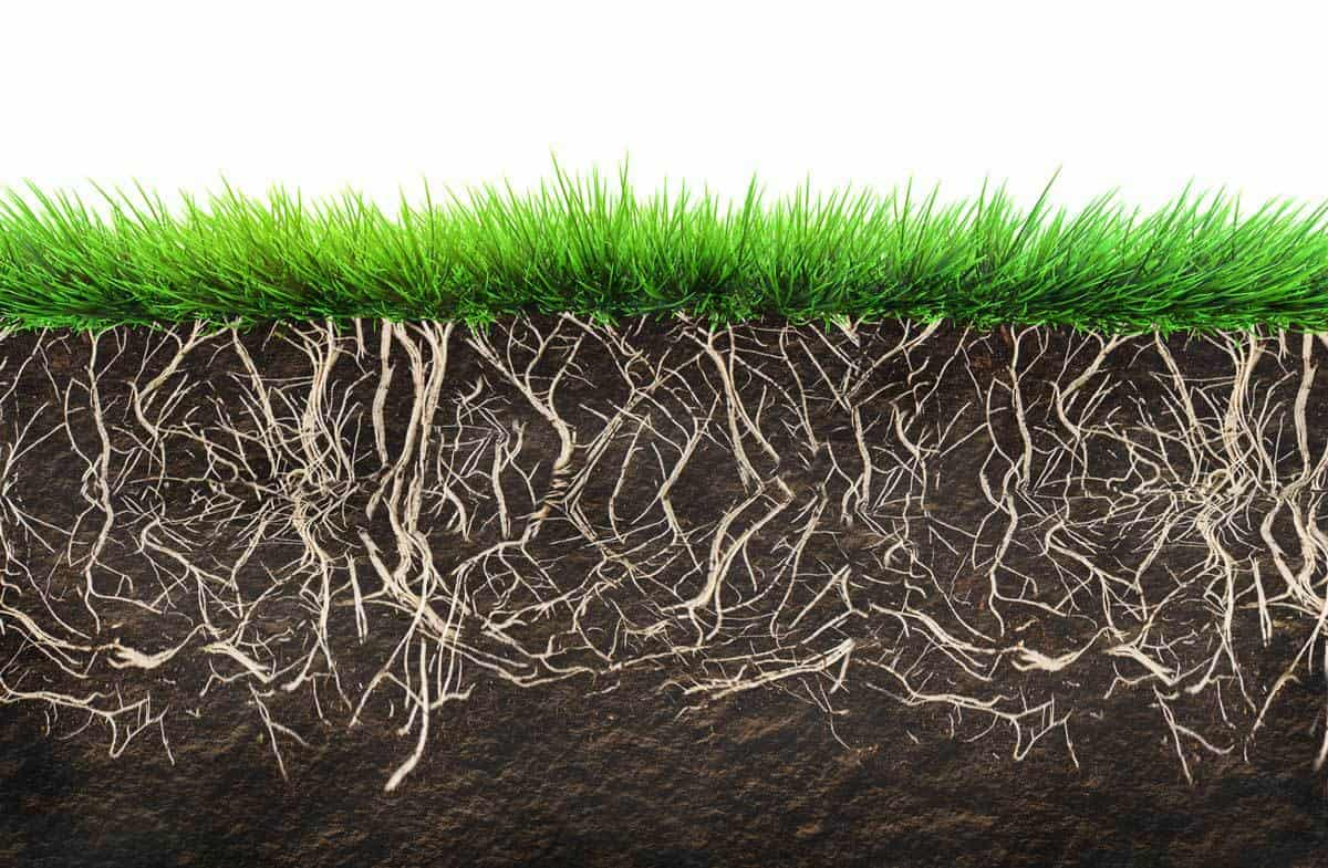 Problems of growing grass in shade for Lawn topsoil