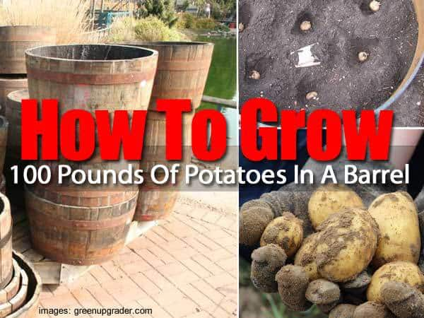 groow-100-pounds-potatoes-053114