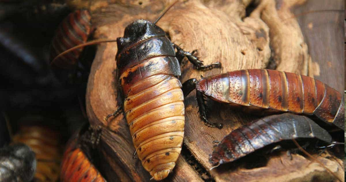 gross-cockroaches-93020151655