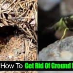 Learn How To Get Rid Of Ground Hornets