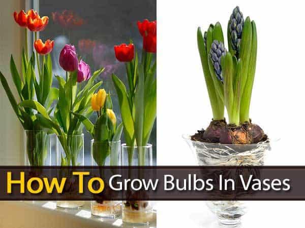 grow-bulbs-vases-053114