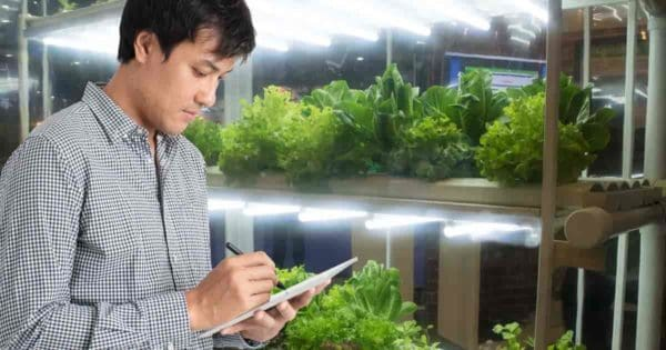 man checking the grow lights setup