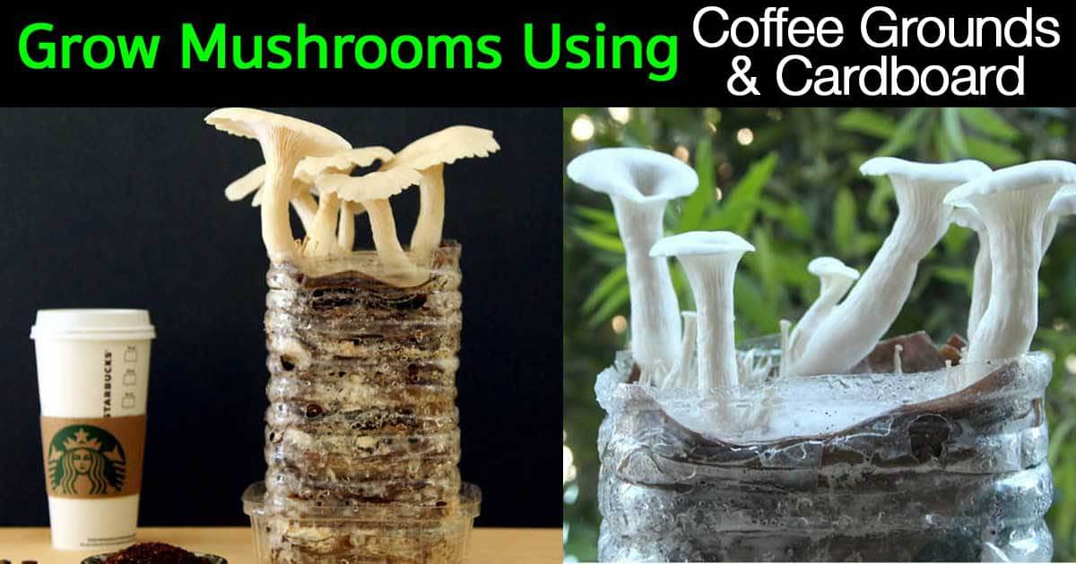 trove how to grow mushrooms