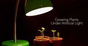 Growing Plants Indoors With Artificial Light For Plants