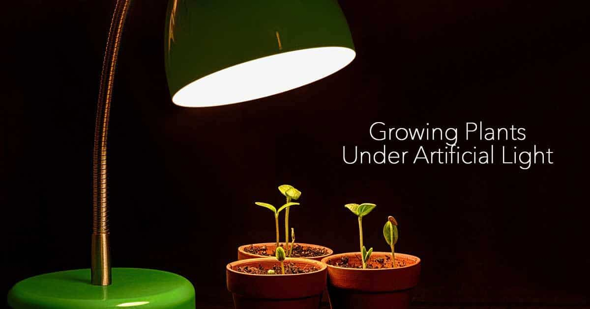 Growing Plants Indoors With Artificial Light What You