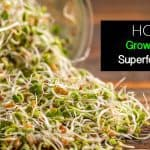 How To Grow Your Own Superfood Sprouts