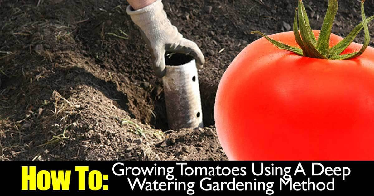 grow-tomatoes-deep-water-02282015