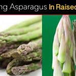 HOW TO Tips For Growing Asparagus In Raised Beds