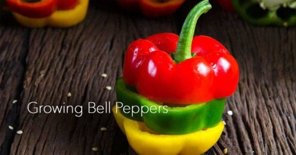 bell peppers 3 types cut