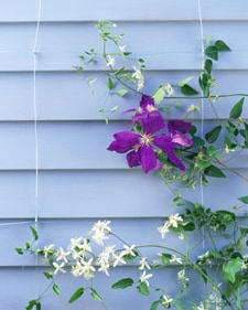 5 Tips For Building A Trellis
