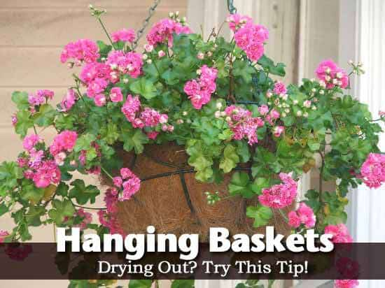 hanging-basket-2-050913