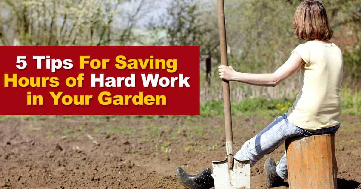 hard-work-garden-09302016