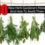 10 Herb Gardening Mistakes And How To Avoid Them