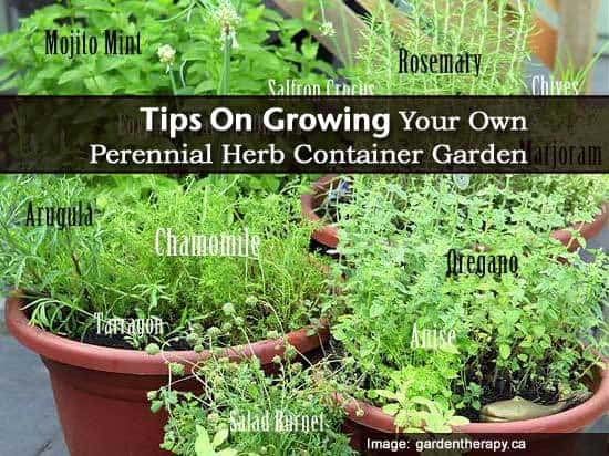 How To Tips Growing Your Own Perennial Herb Container Garden