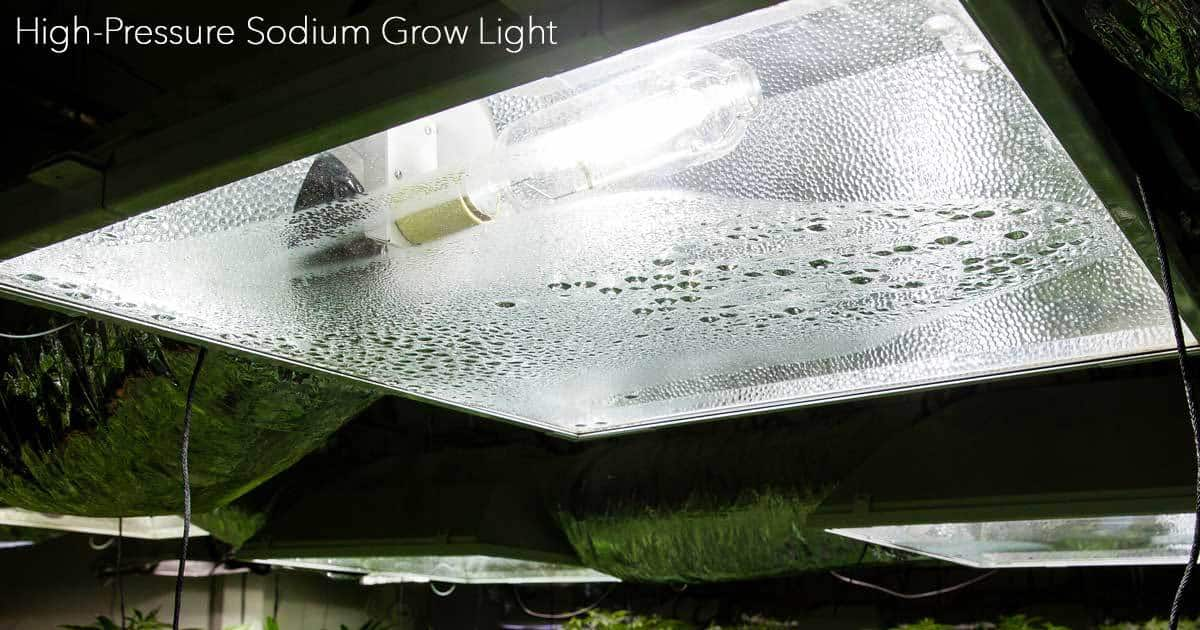 Growing Plants Indoors With Artificial Light: What You Need