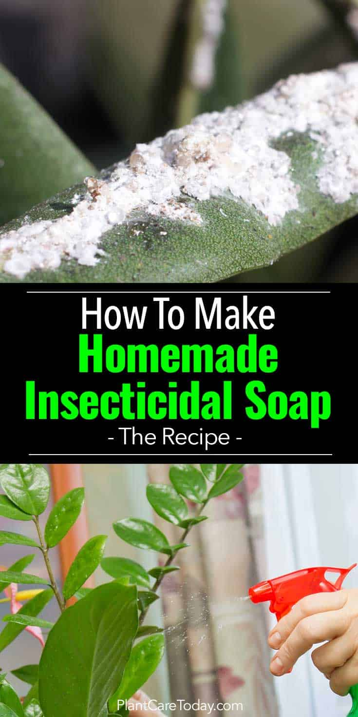 Homemade Insecticidal Soap: How To Make