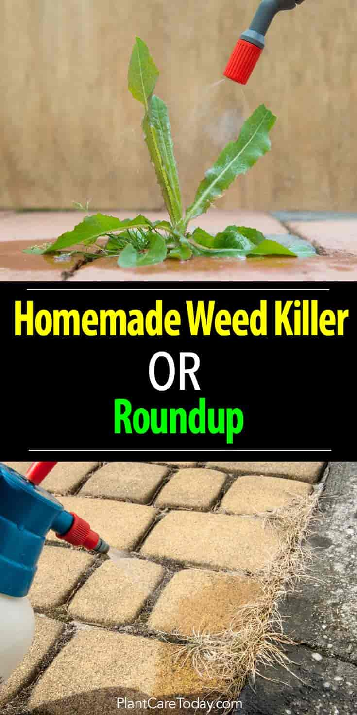 Weed A Better Choice Than Roundup