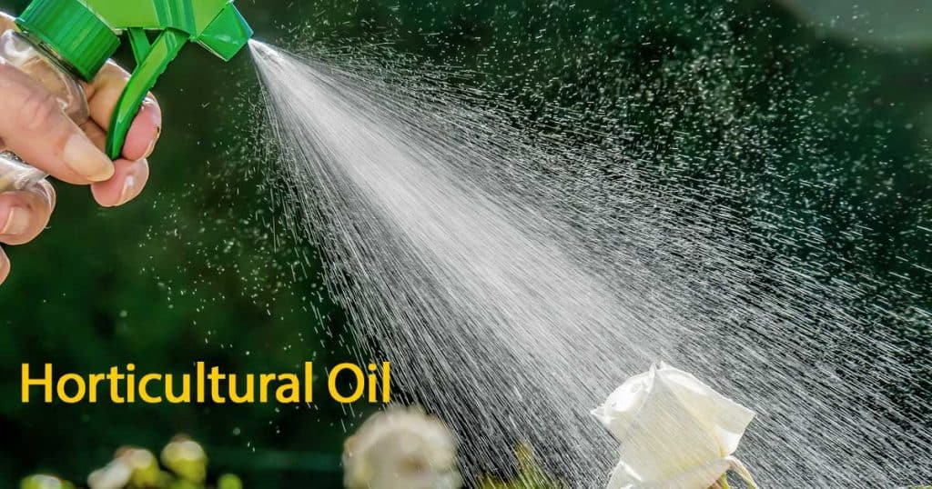 spraying horticultural oil