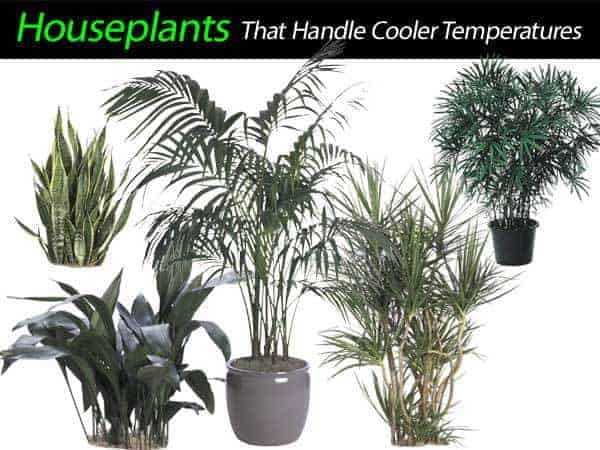 houseplants-cooler-011014
