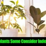 10 Houseplants Some Consider Indestructible