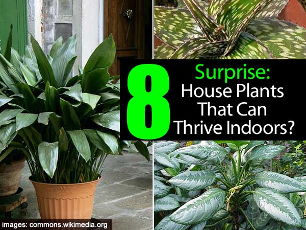8 house plants that can thrive indoors for Easy to keep indoor plants