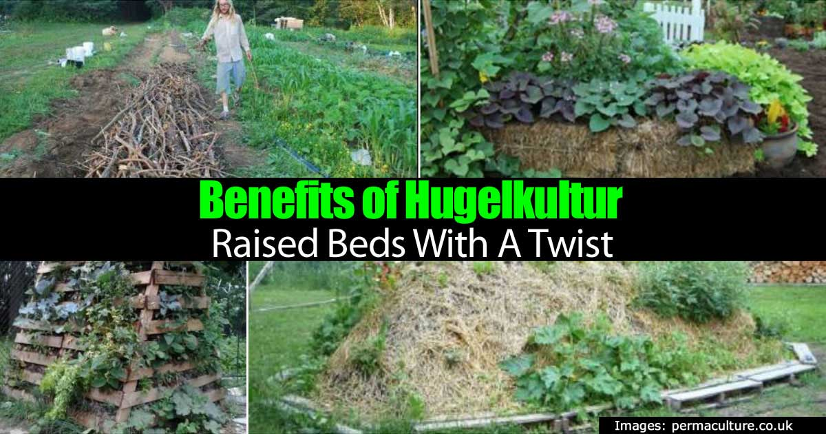 Benefits Of Hugelkultur Raised Beds With A Twist