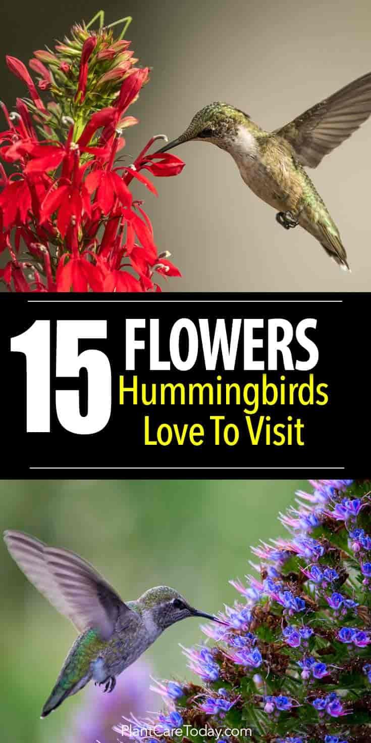 15 flowers hummingbirds love to visit what flowers do hummingbirds like we share 15 hummingbird favorites mightylinksfo