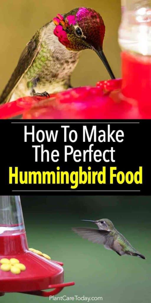 Cómo hacer comida para colibrí