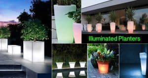 Collection of illuminated planters