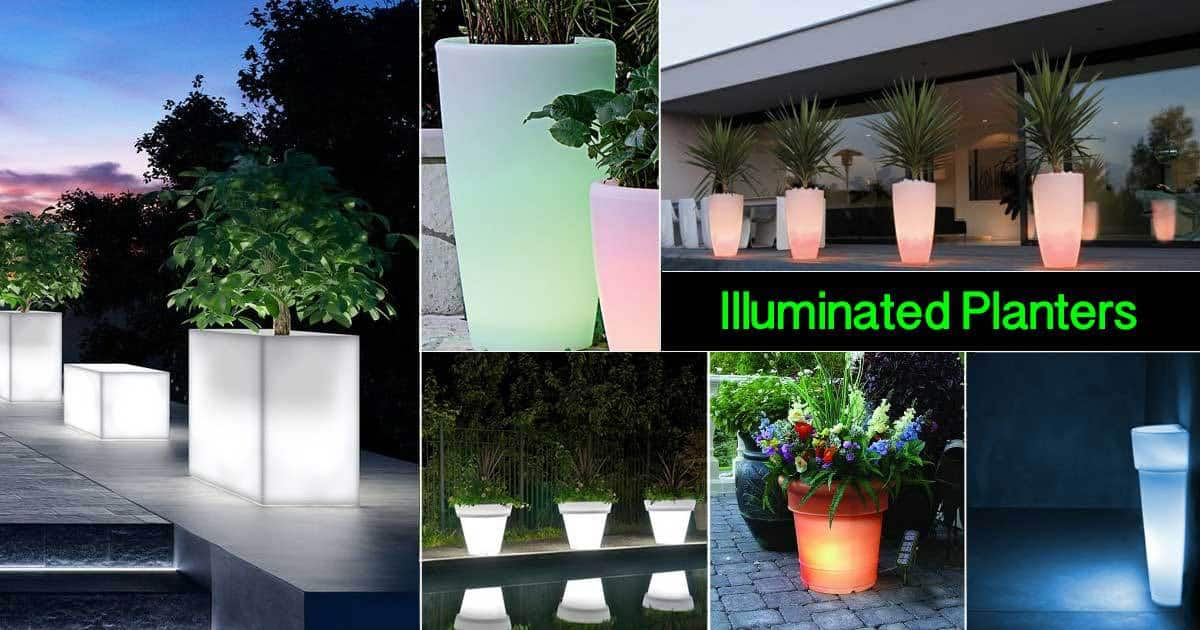 illuminated planters for a romantic backyard
