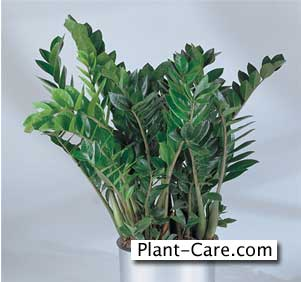 Easy to take care of indoor plants roselawnlutheran for Indoor plant maintenance