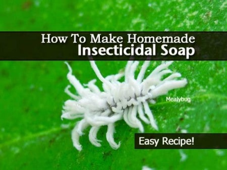 insecticidal-soap-013114