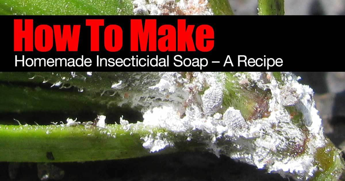 how to make homemade insecticidal soap recipe