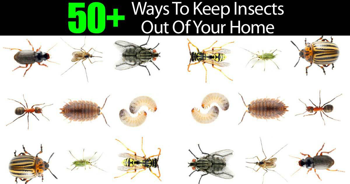 insects-home-22820151075