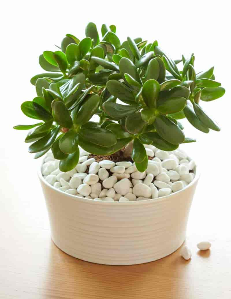 35 of the best indoor plants for your home for Low water indoor plants