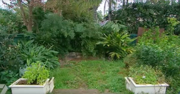 Japanese garden before