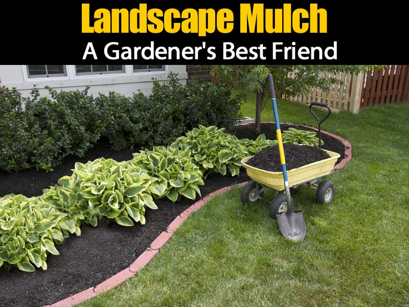 Landscape Mulch A Gardener S Best Friend