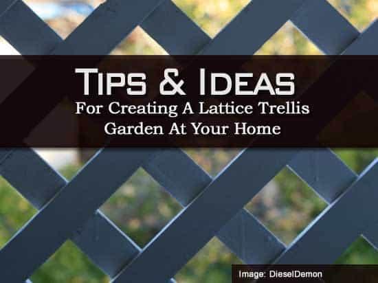 Tips And Ideas For Creating A Lattice Trellis Garden At
