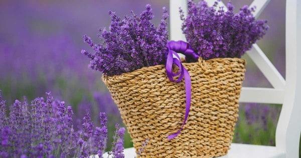 basket of lavender flowers