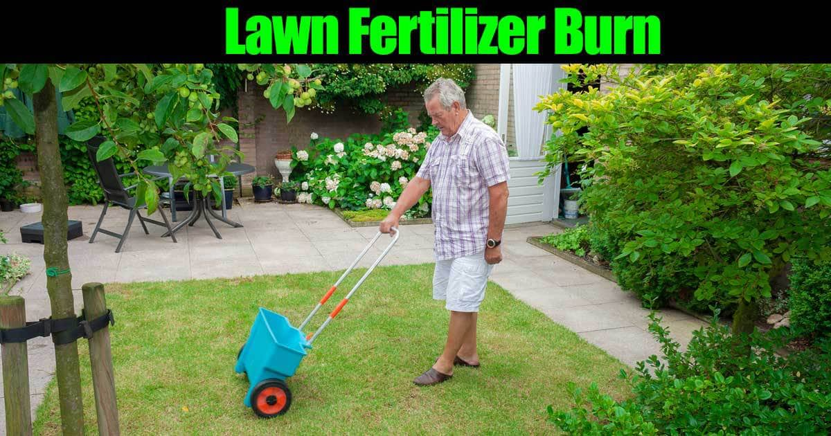 Lawn Fertilizer Burn – Don't Burn Your Yard