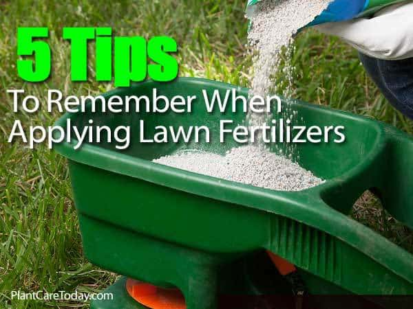Lawn Fertilization How To Feed And Fertilize For Healthy